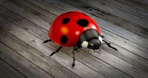ladybug-1919216_640